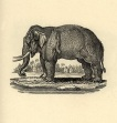 Elephant engraved on wood from Thomas Bewick, The figures of Bewick's quadrupeds. Newcastle upon Tyne: Edward Walker, 1824. 2nd ed. 4to.
